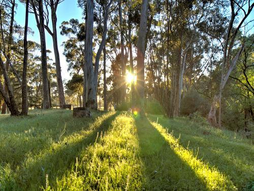 Bundaleer Forest at Dawn