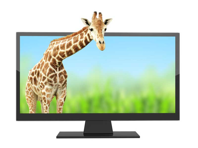 Giraffe coming out of a tv screen