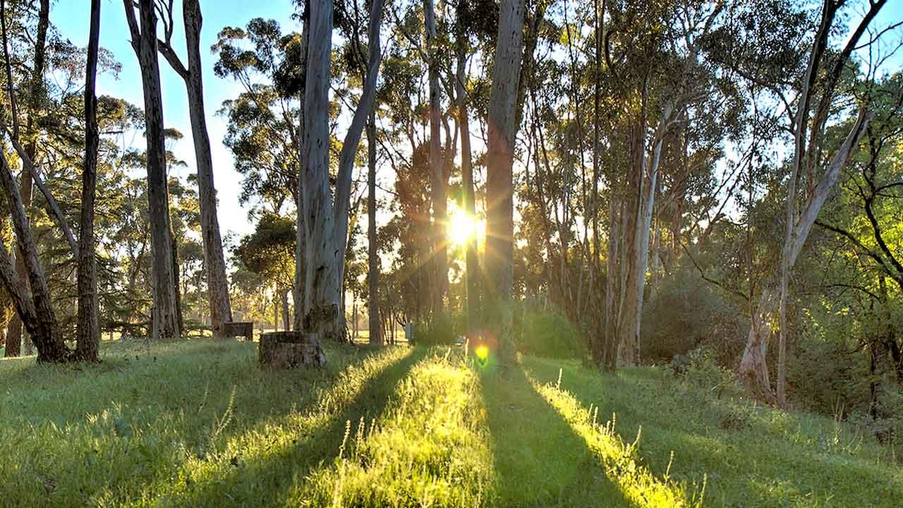 Morning at Bundaleer Forest.