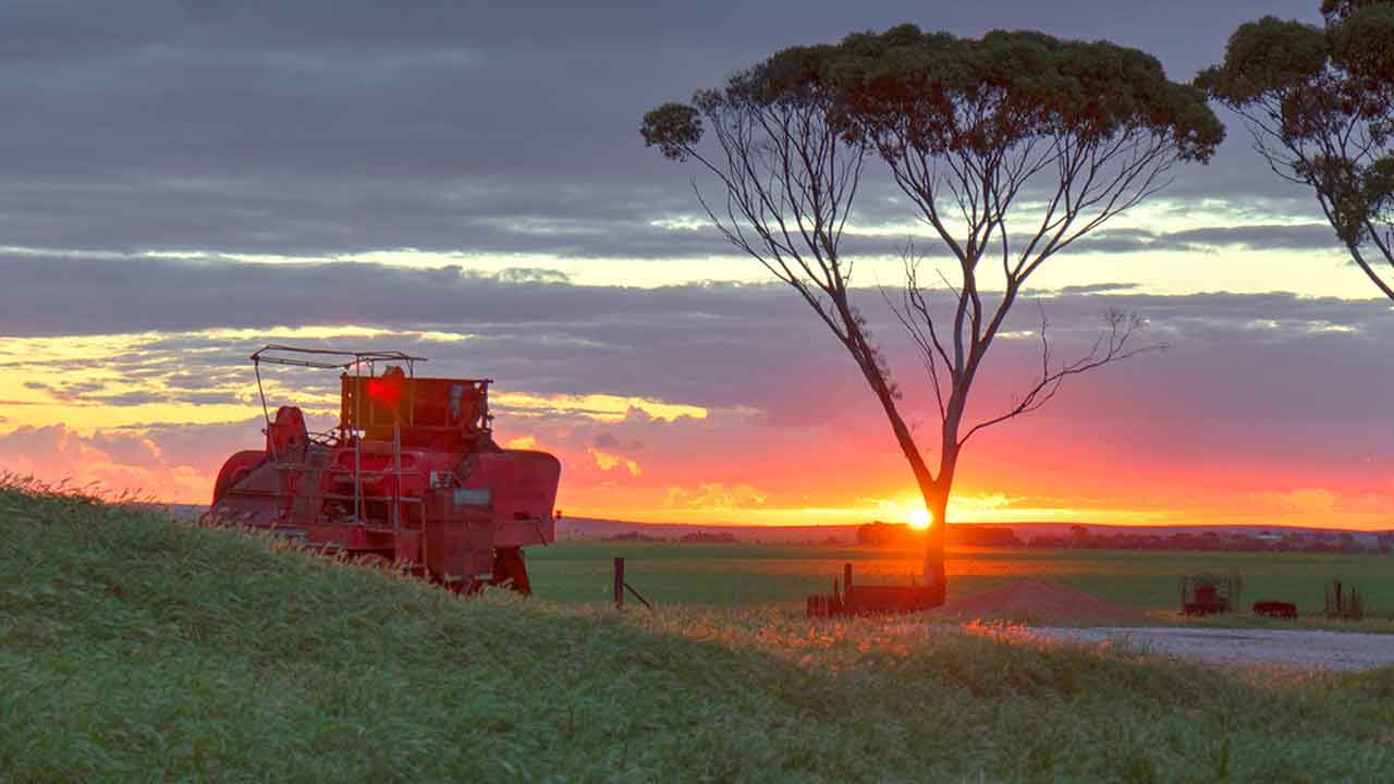 Sunset at Narridy near Clare South Australia